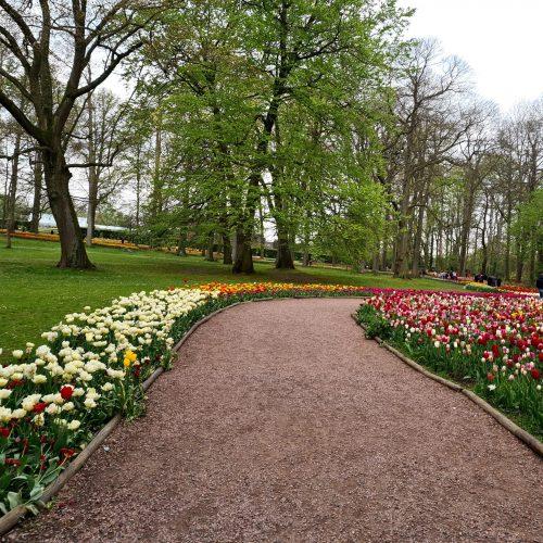 Floralia Groot-Bijgaarden Path With Tulips